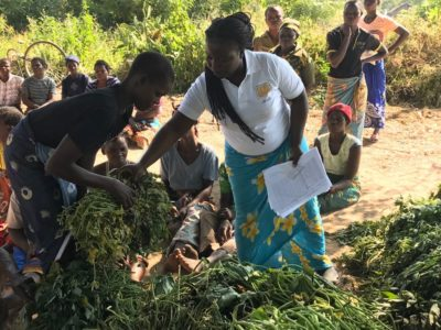 A women receives sweetpotato vines in Nsanje District of Malawi from an agricultural extension agent. Photo: V. Atakos (CIP-SSA)
