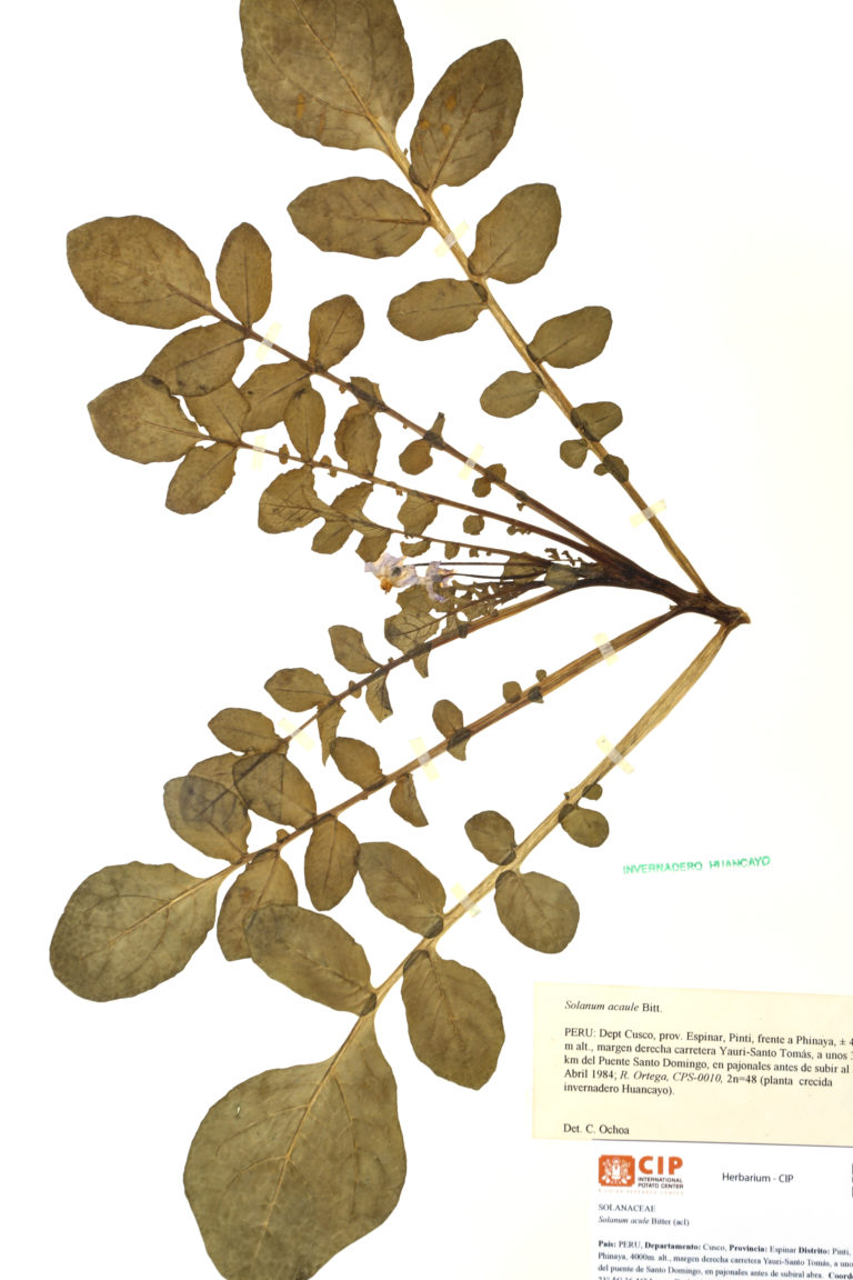 Herbarium stories: Pressed plants, a portal to the past, a window into evolution